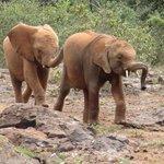 cute baby elephants