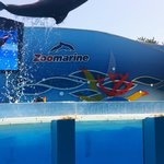 Dolphin back flip at Zoo Marine - sit where we did, and you get splashed!