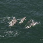 Dolphins offshore...