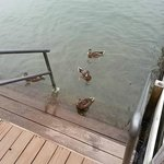 Stairs to Lake and ducks
