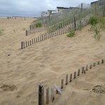 pretty dunes at beach