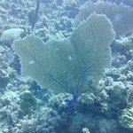 Dickie's Reef 4