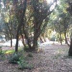 Camper Areal
