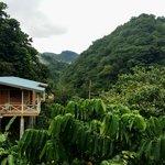Lush Mountain Retreat
