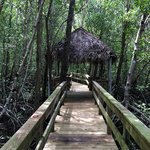 Nice boardwalk outback that was filled with mosquito's and crabs that were all over the trees!