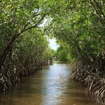 Beautiful path during our airboat tour!