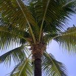 Debajo de una palmera al lado de la piscina