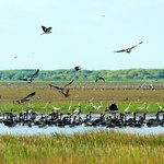 Bird life on the wetlands