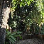 Jardin privatif de la chambre 14