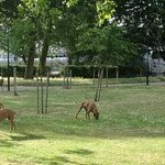 Dogs on the Isle of Dogs--maybe named for Henry VIII's hunting dogs hang out