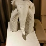 Towel Elephant in room