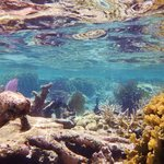 Snorkeling at Rocky Point