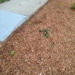 Entrance sidewalk scattered with trash, cig butts & weeds