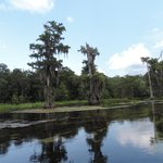 Scenery at Wakulla Springs