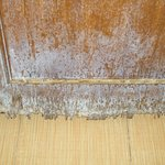 bathroom door rotten with mould and falling apart