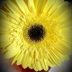 Nice flowers always