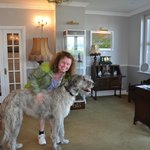 Seamus the Irish Wolfhound in Dingle, County Kerry