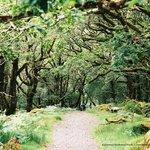 Killarney National Park, County Kerry