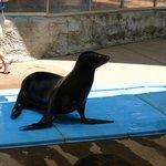 Cool Sea Lion