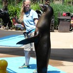 Clapping Sea Lion
