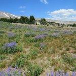 Mount Hood summer meadow