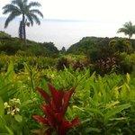 gardenEden Road to Hana