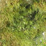 close up view of moss