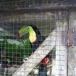 Ook verschillende vogels worden er opgevangen