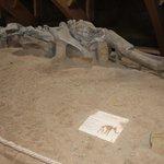 Skelet van een mammoet