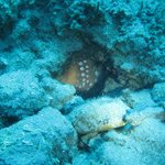 Onderwaterleven