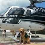 Service dog Crane, from ECAD