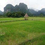 Amazing padi field
