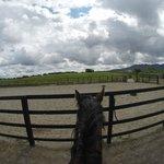 Horse Dugo :)
