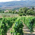 Vineyards of Portagioia
