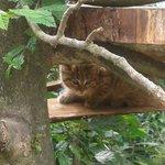 un des bébés chats sauvages né au parc