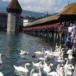 the bridge and swans