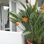 Zimmer auf Garten-/Poolseite