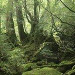 もののけ姫の森3