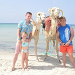camels on beach