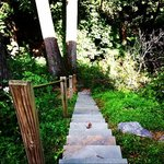 Trail in the backyard