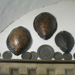 Turtle Shells above Kitchen Fire Place
