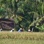 Culture di riz à l'ancienne