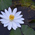 Un détail du jardin fleuri