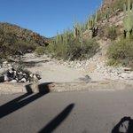 Saguaro, mountains...peace