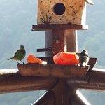 Pássaros no café da manhã