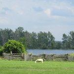Lovely pastoral scenes
