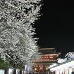 仲見世と雷門前の夜桜