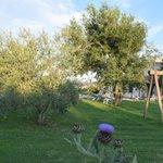 altalena nel giardino tra gli olivi