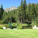 View under the Sierra Buttes