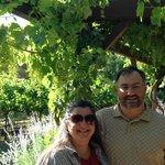 Ij the vineyards